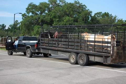 Delivered in style by a real Florida cowboy (complete with horse)