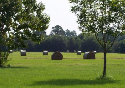 Hay Harvest 2010