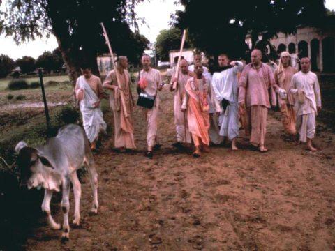 Srila Prabhupada in Vrindavan