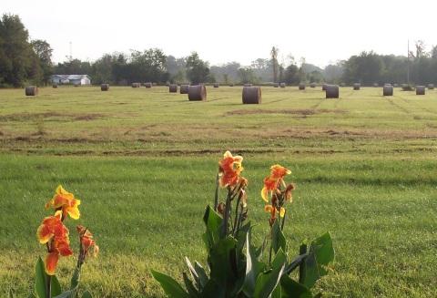 2012 Hay
