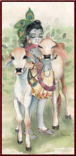 Krishna and calves