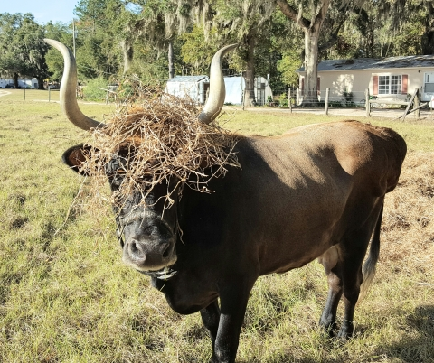 Rajani wears her hay crown in style